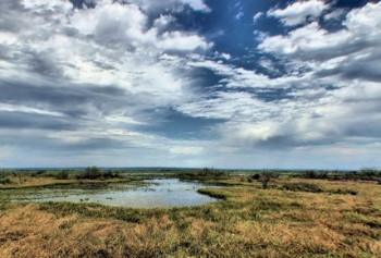 Paynes Prairie. Photo via Florida Department of Environmental Protection.